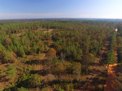 Hunting And Timber Conecuh County : Range : Conecuh County : Alabama