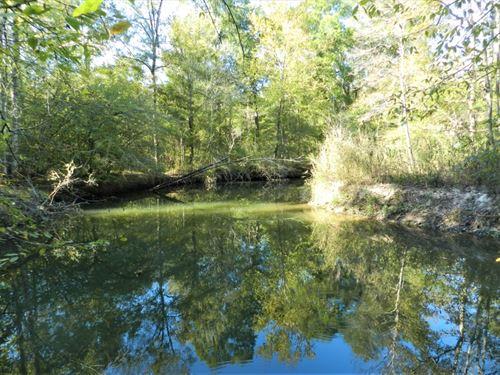 Panther Branch Preserve : Sandersville : Washington County : Georgia