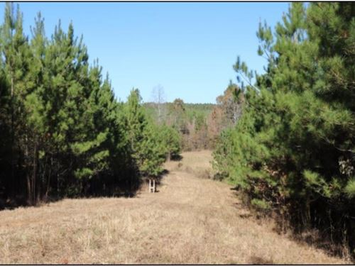290 Acres In Newton County In Coneh : Conehatta : Newton County : Mississippi