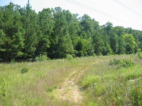 176+ Acres near Historic Pittsboro : Pittsboro : Chatham County : North Carolina