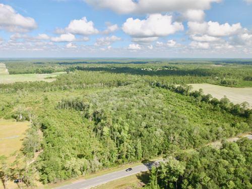 42 Acres With Pond Site : Hortense : Brantley County : Georgia