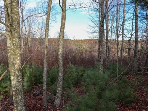 Wooded Land in Floyd County VA : Indian Valley : Floyd County : Virginia