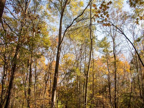 20 Acres Perfect For a Home Site : Hope Hull : Montgomery County : Alabama