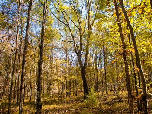 40 Acres With Great Hunting And Ho : Hope Hull : Montgomery County : Alabama
