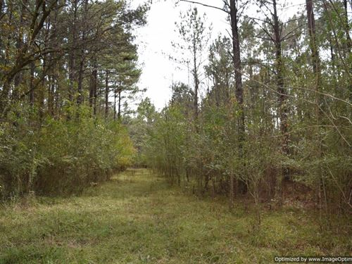 Remote Sanctuary, Hunters Dream : Forest : Scott County : Mississippi