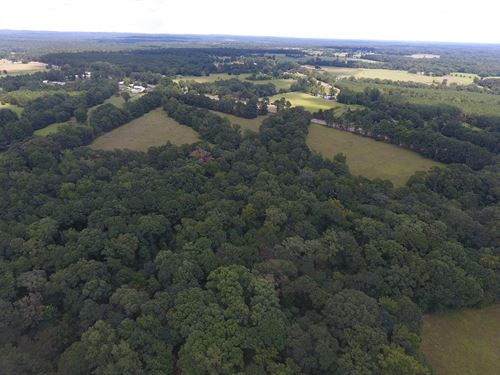 Pasture Land : Bronson : Sabine County : Texas