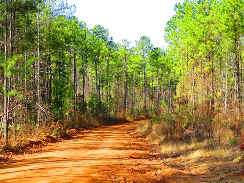 Yellow Bluff Tract : Pine Hill : Wilcox County : Alabama