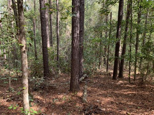 100 Acres With Timber & Creek : Americus : Sumter County : Georgia