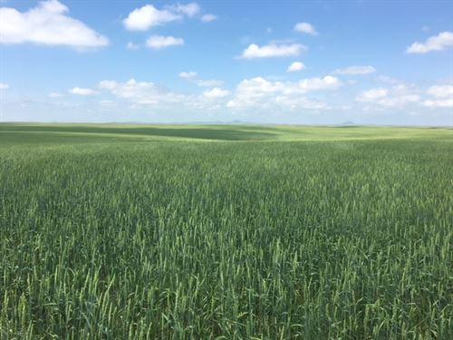 Goeringer Farms : Newell : Butte County : South Dakota