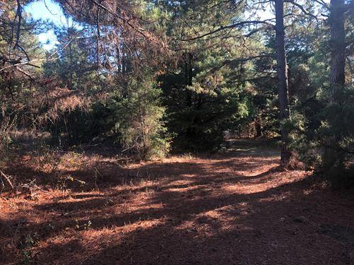 East Texas Hunting Timber Land Cass : Linden : Cass County : Texas