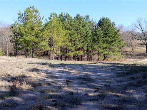 48 Acres Wood County, Winnsboro : Winnsboro : Wood County : Texas