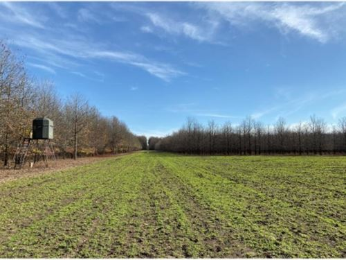 788 Acres In Issaquena County Indi : Redwood : Issaquena County : Mississippi
