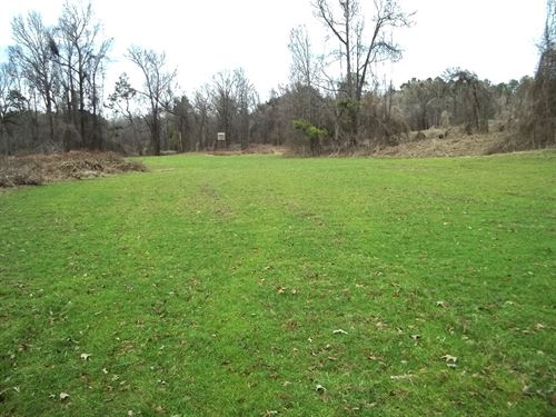 80 Ac, Woods, Wildlife, Food Plot : Cascilla : Tallahatchie County : Mississippi