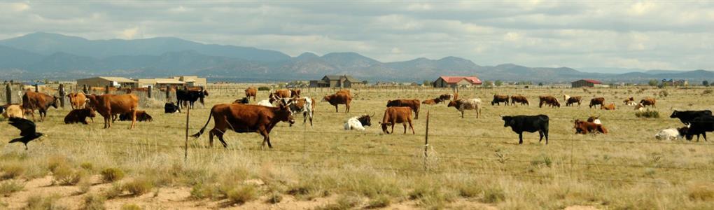 120 Acres Level Land-All Together : Sierra Blanca : Hudspeth County : Texas
