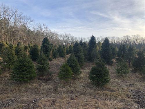 Christmas Tree & Nursery Farm : New Egypt : Ocean County : New Jersey