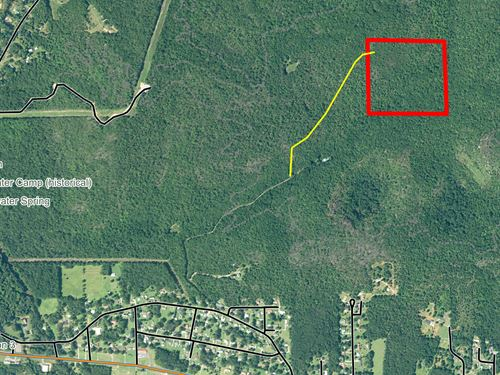 Coldwater Mountain Timber Property : Oxford : Calhoun County : Alabama