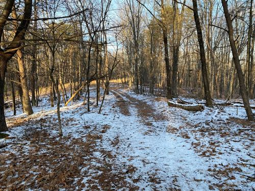 MD Acres With State Forest Access : Flintstone : Allegany County : Maryland