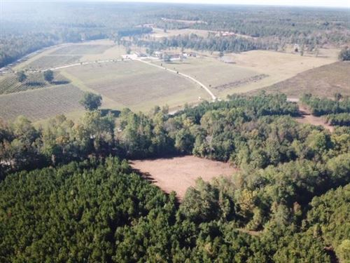 11.48 Acres Vineyard Creek Estates : Auburn : Lee County : Alabama