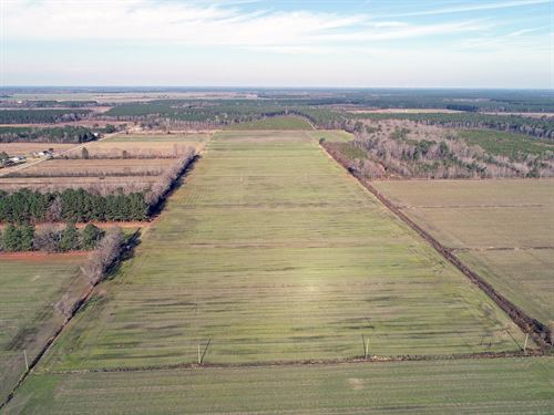 Chowan County Farmland : Edenton : Chowan County : North Carolina