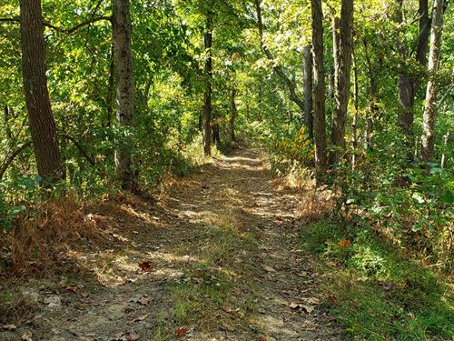 Hunters Dream, 48 Acre Hunting : Rutland : Meigs County : Ohio