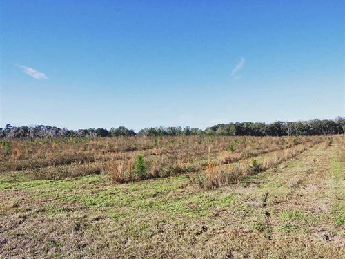 10 Acres in Lee, FL : Lee : Madison County : Florida