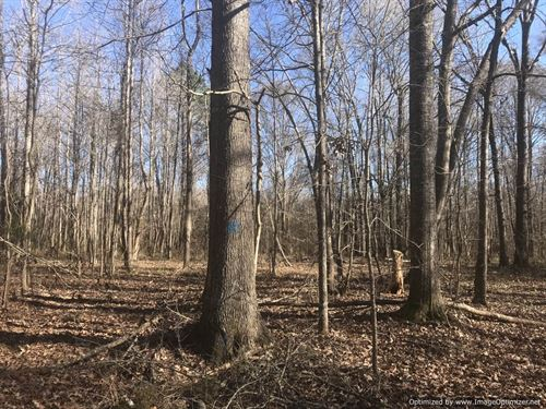 Beautiful Land With Cabin : Natchez : Adams County : Mississippi
