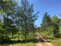 1179 Acres, Will Divide : Springville : Jefferson County : Alabama