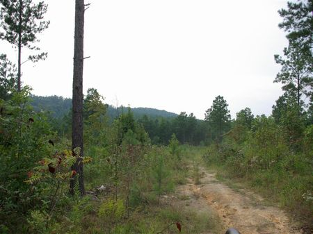 20+/- Acres - Pirvate Estate : Odenville : Saint Clair County : Alabama