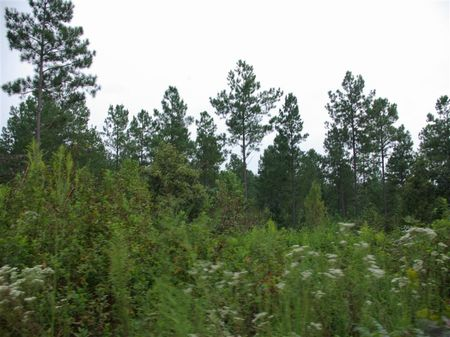 42+/- Acre Private Estate : Odenville : Saint Clair County : Alabama