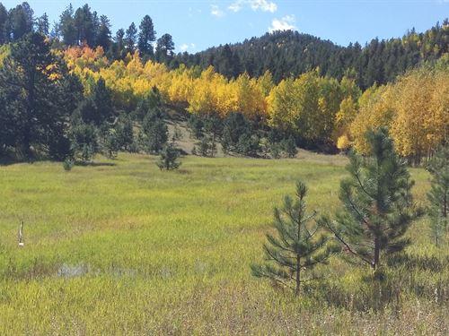 40 Acres Pond Central Colorado : Cripple Creek : Teller County : Colorado