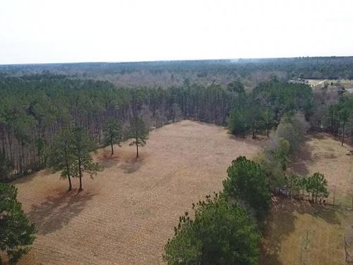 12 Acre Homesite/Recreational Tract : Livingston : Polk County : Texas
