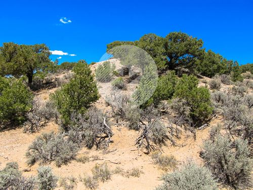 Adjoining Lots, Trees & Creek : Fort Garland : Costilla County : Colorado