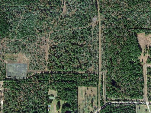 Beautiful 120 Acre Tract : Livingston : Polk County : Texas