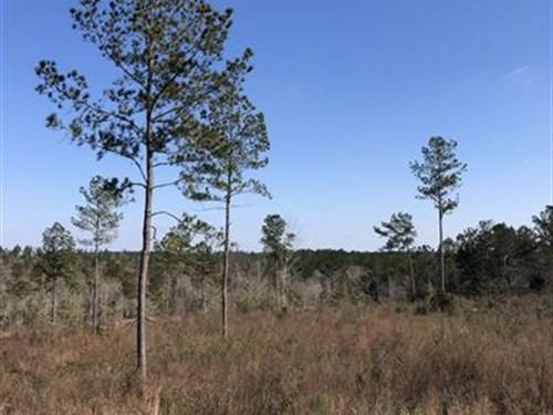 80 +/- Acres Colvin Rd Cov, County : Red Level : Covington County : Alabama