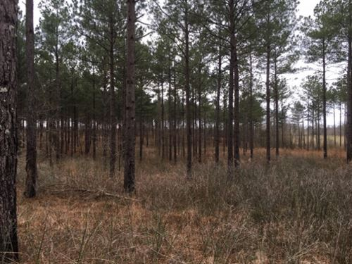 598 Acres In Holmes County In Goodm : Goodman : Holmes County : Mississippi