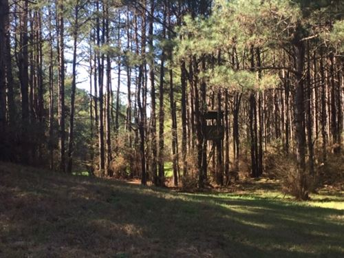 Ard Rd, 50 Acres : Tylertown : Walthall County : Mississippi