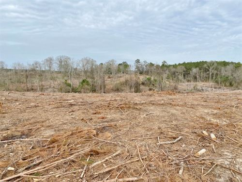 30 Acres / Walthall County/Lexie : Tylertown : Walthall County : Mississippi