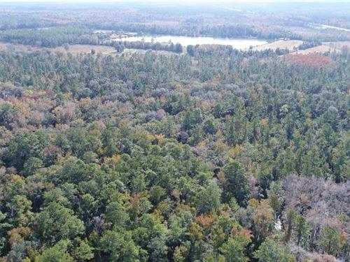 Billyville 122 : Woodbine : Camden County : Georgia