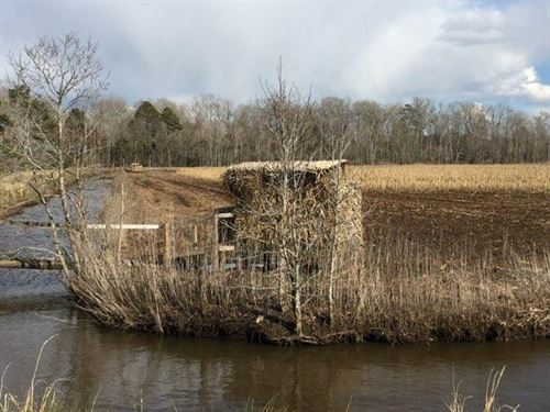 Waterfowl Impoundments / Farm Land : Engelhard : Hyde County : North Carolina