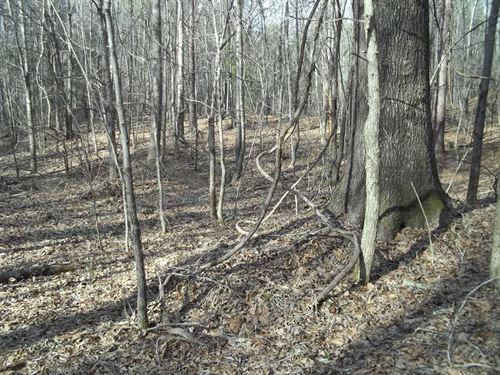 Sardis Lake Hunting Land : Sardis : Panola County : Mississippi