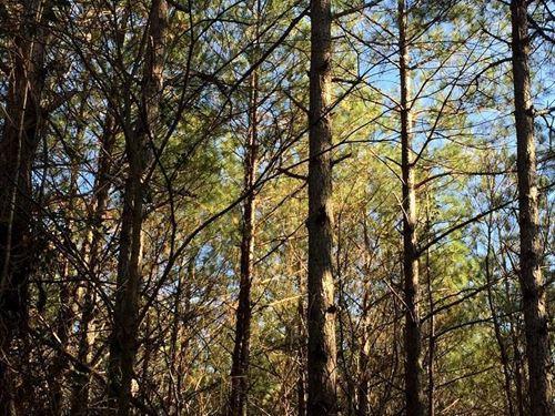Cherokee, Beacon Light Road : Cherokee : Colbert County : Alabama
