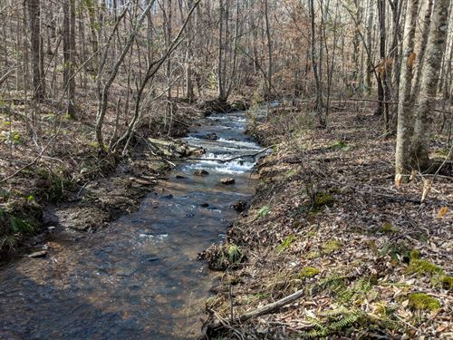 64+/- Acres and Cabin : Wadley : Clay County : Alabama