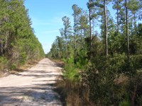 627 Acre Timber Investment Tract : Folkston : Charlton County : Georgia