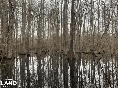 County Line Hunting Land : Lumberton : Robeson County : North Carolina