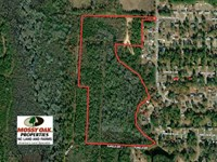 Reduced, 35 Acres of Hunting Land : Laurinburg : Scotland County : North Carolina