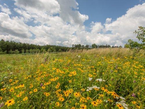Wf: Minifarm On The Mountain : Signal Mountain : Sequatchie County : Tennessee