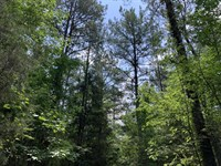 599 Acres of Hunting Land in AL : Marion : Perry County : Alabama