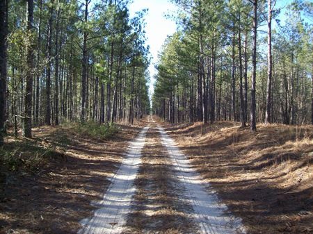 Excellent Hunting Timber Investment : Kelly : Bladen County : North Carolina