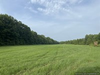 Hunting Land with Food Plots : Hazlehurst : Copiah County : Mississippi