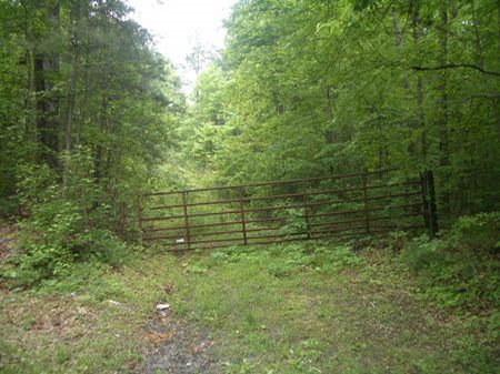 70 Ac Privacy W/ Easement - Ko0027 : Lafayette : Walker County : Georgia